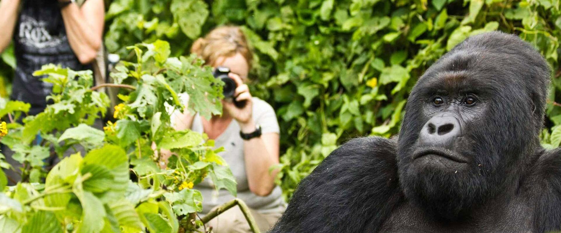 Uganda Photography Safari
