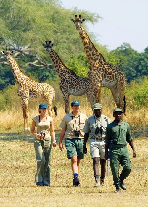DRC-Safari-Activities