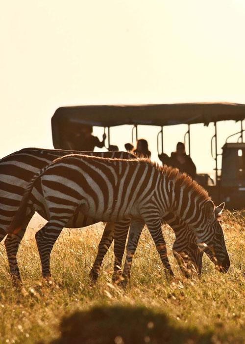 DRC Safari Faqs