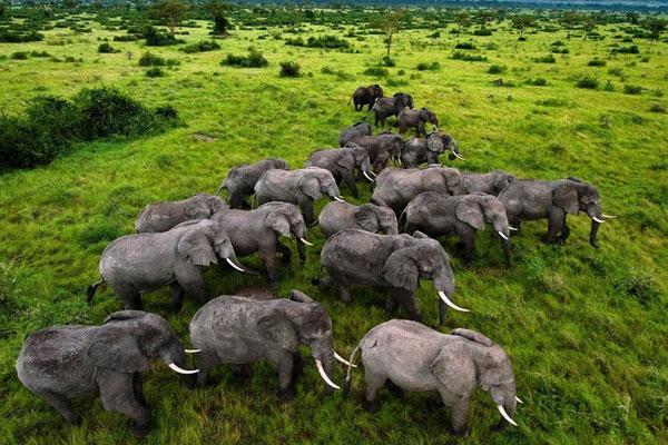 East-Africa-Safari