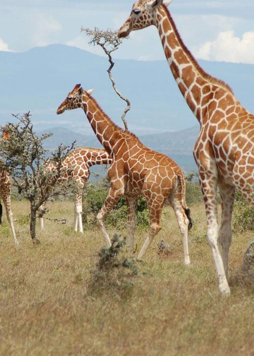 Kenya National Parks