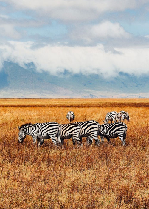 Kenya Safari Activities