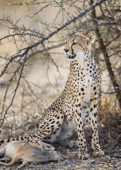 Kenya Safari Faqs