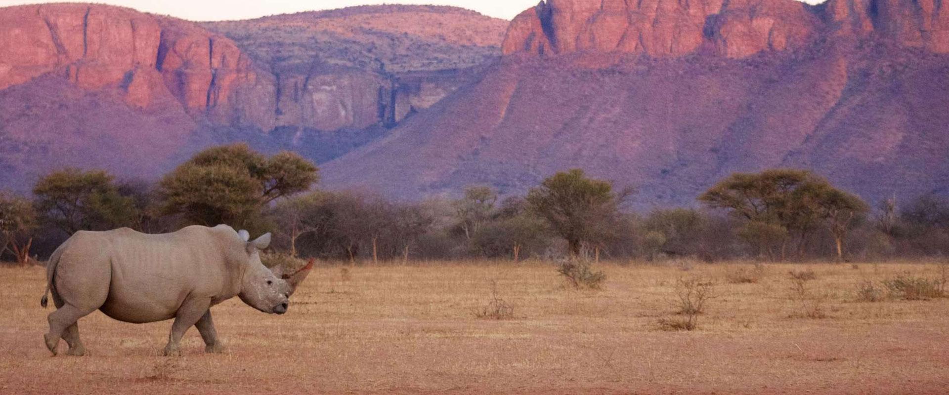 South-Africa-Safari