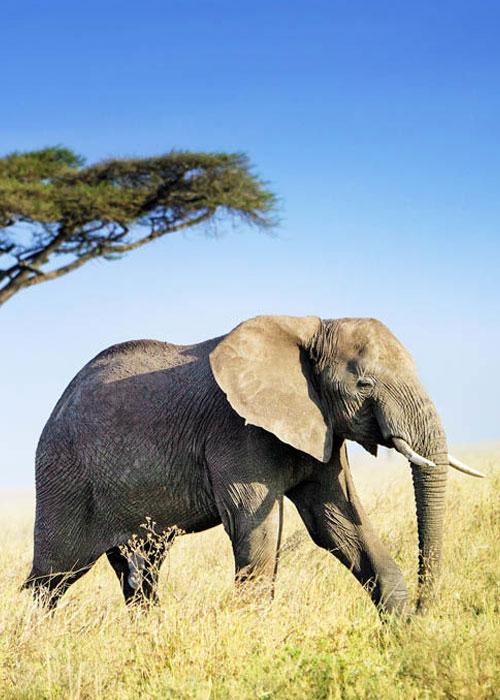 Tanzania Safari Activities