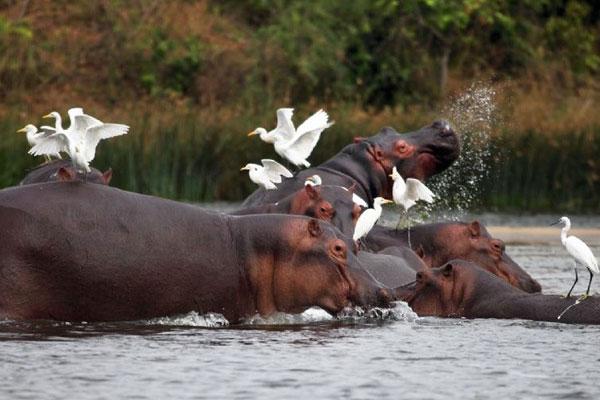 Uganda-Birding-Safaris
