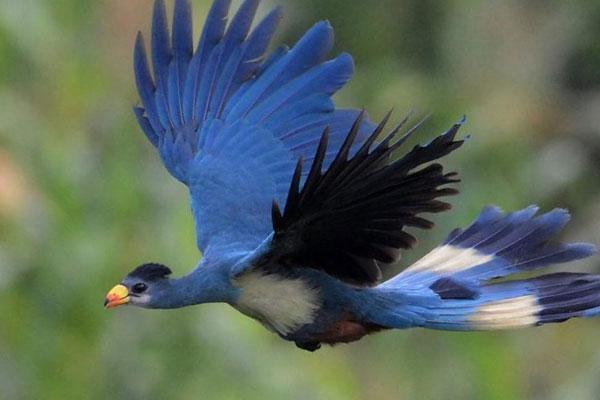 Uganda-Birding-Tour