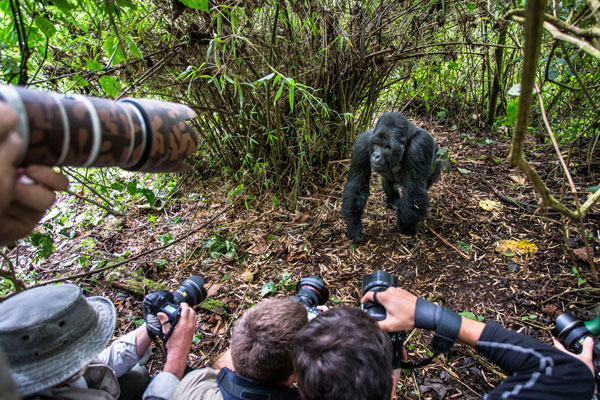 Uganda Photography Tour
