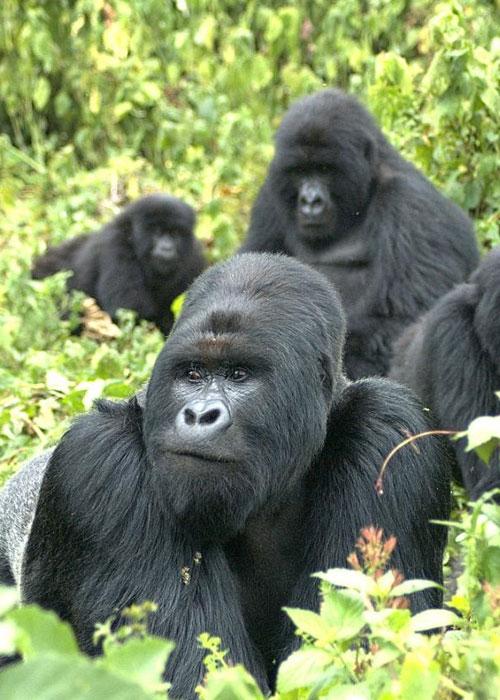 Uganda-Safari-Activities