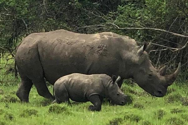 Uganda Wildlife & Fishing Tour